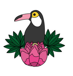toucan leaves flower tropical summer vector image