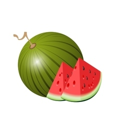 Watermelon isolated watermelon on white vector