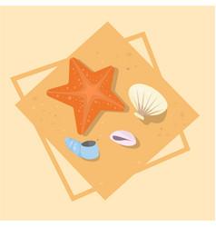 star fish and shells icon summer sea vacation vector image