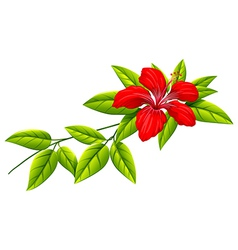 A plant with a red flower vector