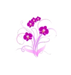 Decorative bouquet purple orchid vector image
