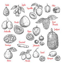 Exotic tropical fruits sketch vector