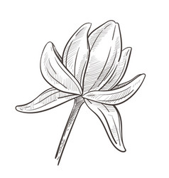 Flower on stem lotus water plant isolated sketch vector