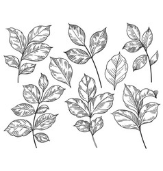 Hand drawn different leaves set vector