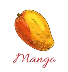 Mango fruit color sketch icon vector image