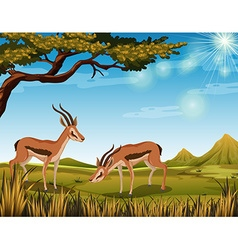 Two antelopes in the field vector image