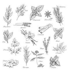 herbs and spices sketch icons vector image