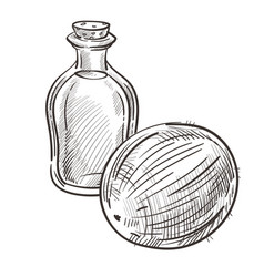 coconut oil in bottle and whole plant hand drawn vector image