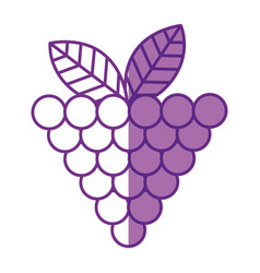 Grapes fresh fruit icon vector