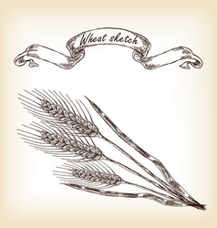 hand drawn wheat vector image