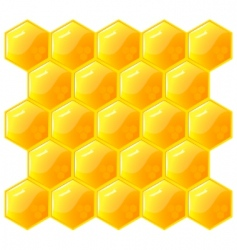 honeycomb isolated on the white vector image vector image