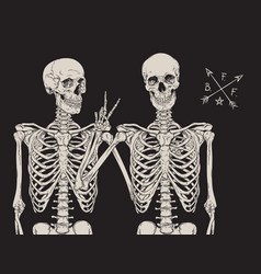 human skeletons best friends posing isolated vector image