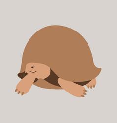 cartoon turtle flat style vector image