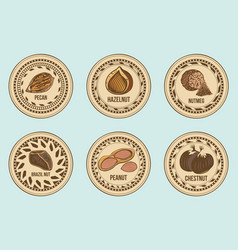 colorful fresh nuts round labels set vector image