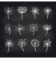 Dandelions chalk sketch on blackboard set vector