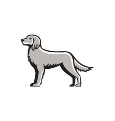 English Setter Standing Side View Retro vector image