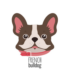 french bulldog face cute brown frenchie vector image