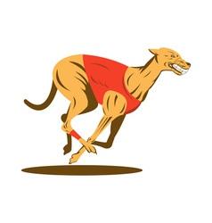 greyhound dog racing vector image