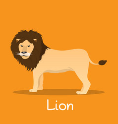 Lion flat african wildlife wild animal vector