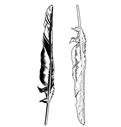 crow feather vector image vector image