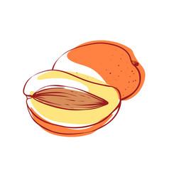 ripe mango isolated icon vector image