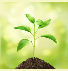 small green sprout vector image vector image