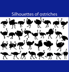 Collection of silhouettes of common ostriches vector
