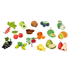 Set tropical fruits flat color icon vector