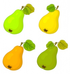fruit pears vector image
