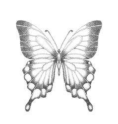 Black and white butterfly vector