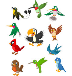 Cartoon birds collection set vector
