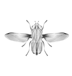 Fly 3d style for print tatto vector
