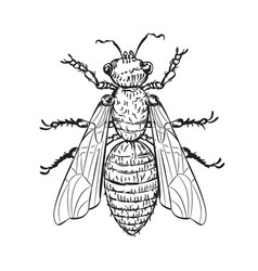 House fly line art vector