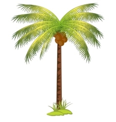 Palm with coco vector