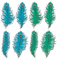 Set colored peacock feather vector