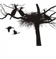 cormorant nest vector image vector image