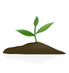 young plant in dark soil vector image vector image