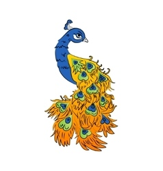 colored peacock on a white background vector image