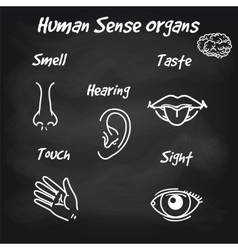 Human sense organs on chalkboard background vector