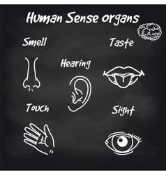 human sense organs on chalkboard background vector image