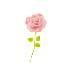 pink rose with stem and leaves floral design vector image