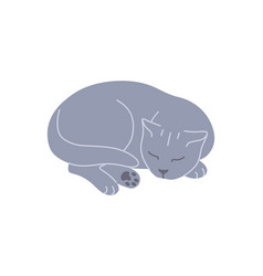 sleeping gray british cat curled up vector image