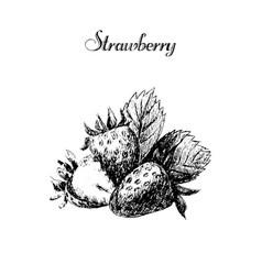ink hand drawn vintage strawberry vintage fruit vector image vector image
