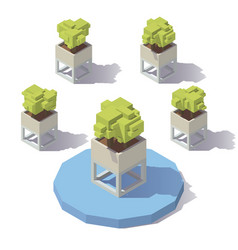 isometric plant pot vector image