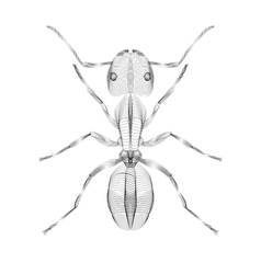 Ant 3d style for print tatto vector image vector image