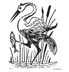 Bird catching fish vintage vector