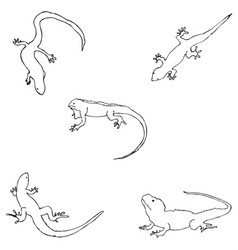 Lizards sketch by hand pencil drawing by hand vector