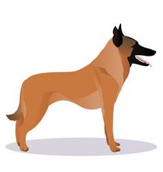 Malinois cartoon dog vector