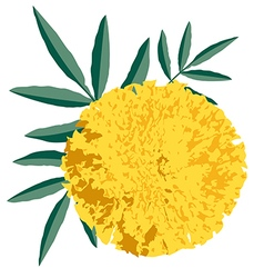 Marigold preview vector