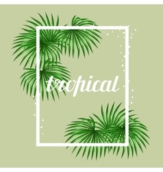 Paradise card with palms leaves design for vector